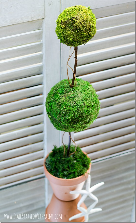 how-to-make-a-topiary-with-moss-balls