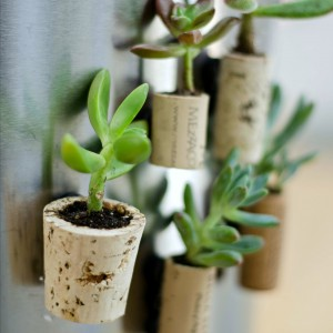 Wine Cork Planter Magnet