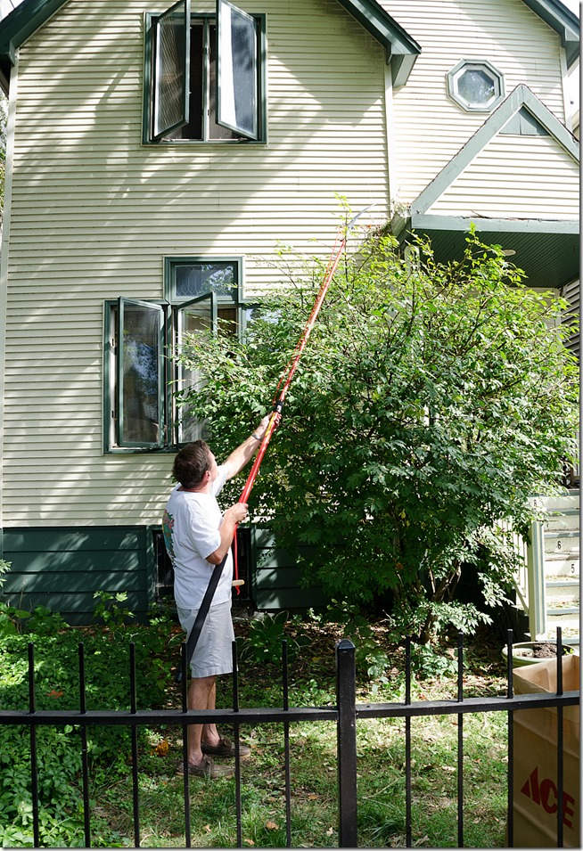 tree-pruning-hedge-trimming-10