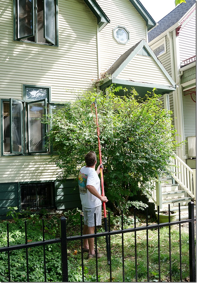 tree-pruning-hedge-trimming-11