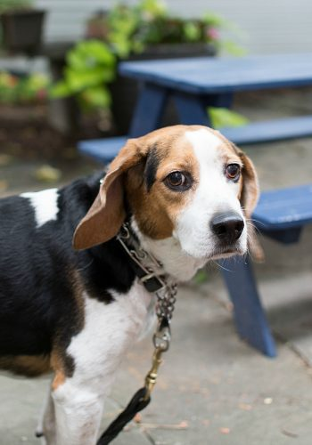Iams Visible Differences: Dog Health With Iams