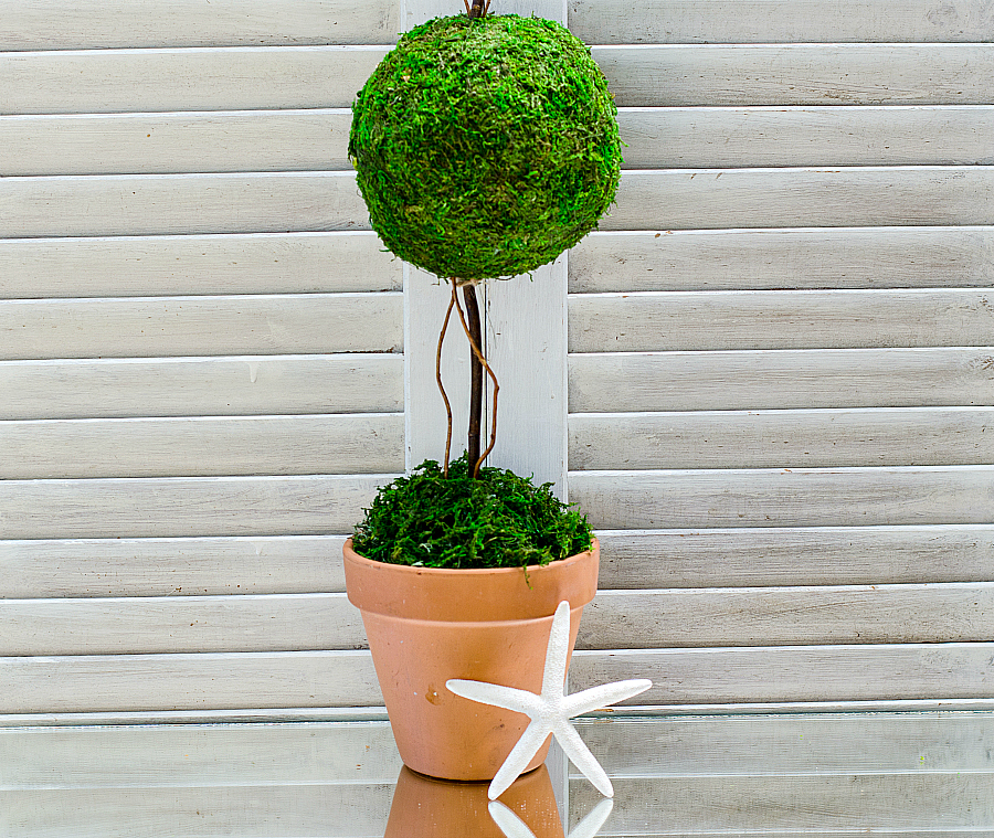 how-to-make-a-topiary-2