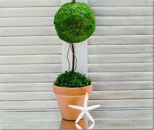 how-to-make-a-topiary-2_thumb