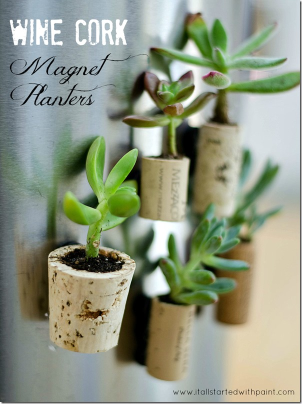 Succulent Planter Idea: Wine Cork Magnets
