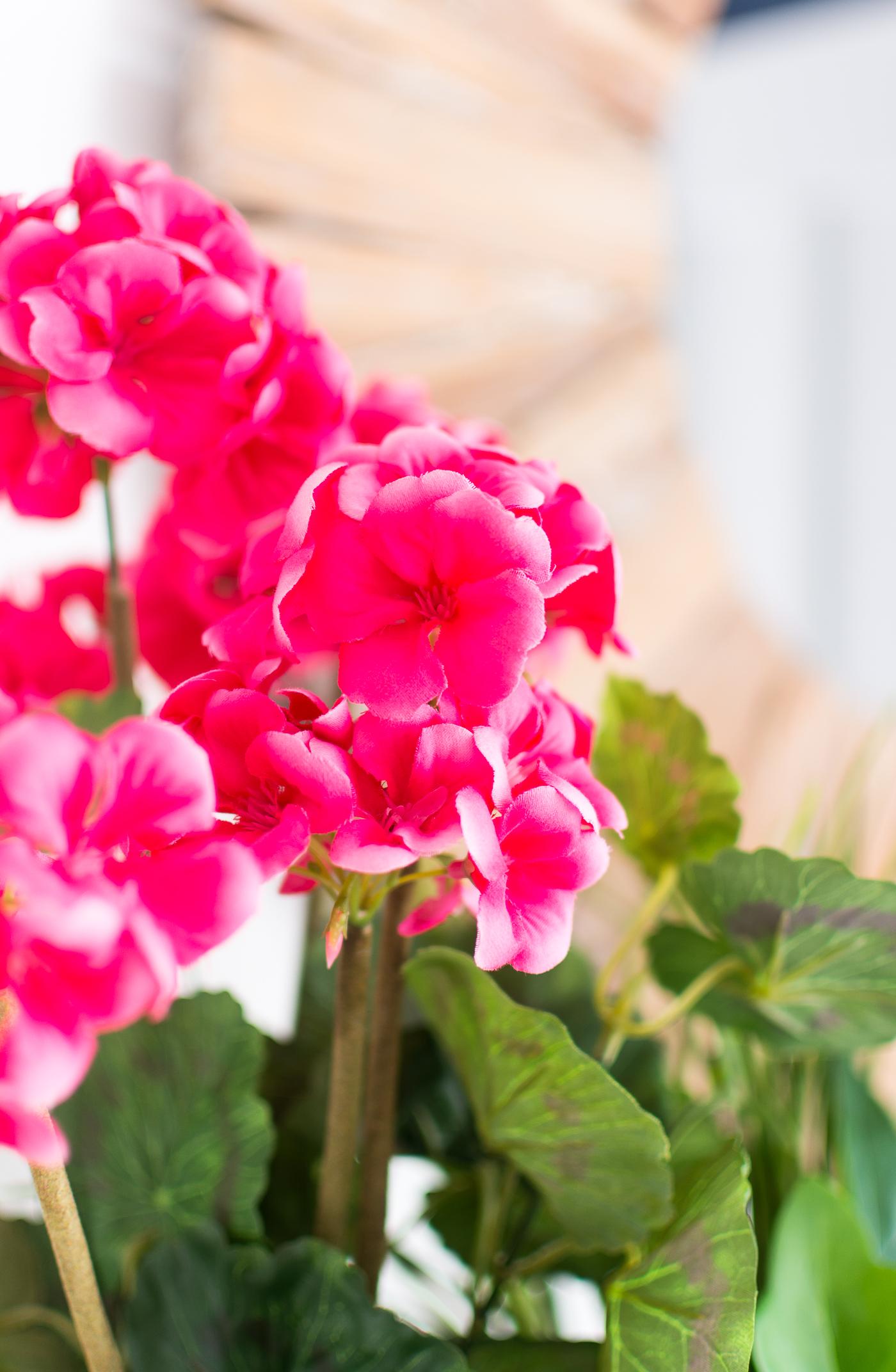 Silk Geraniums
