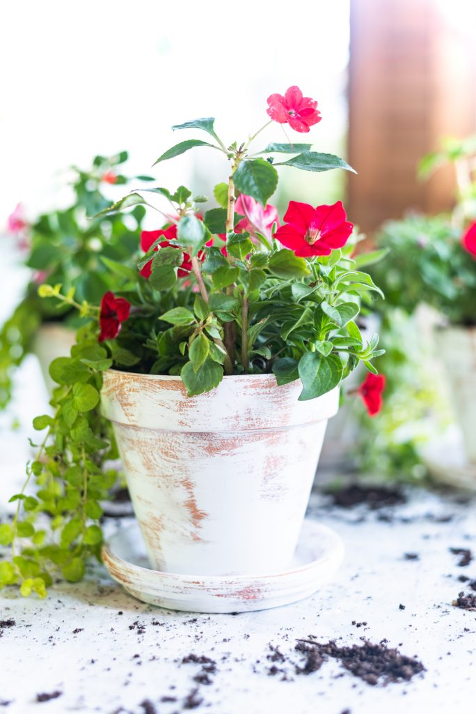 Easy distressed terracotta flower pots - age flower pots with chalk paint and sandpaper