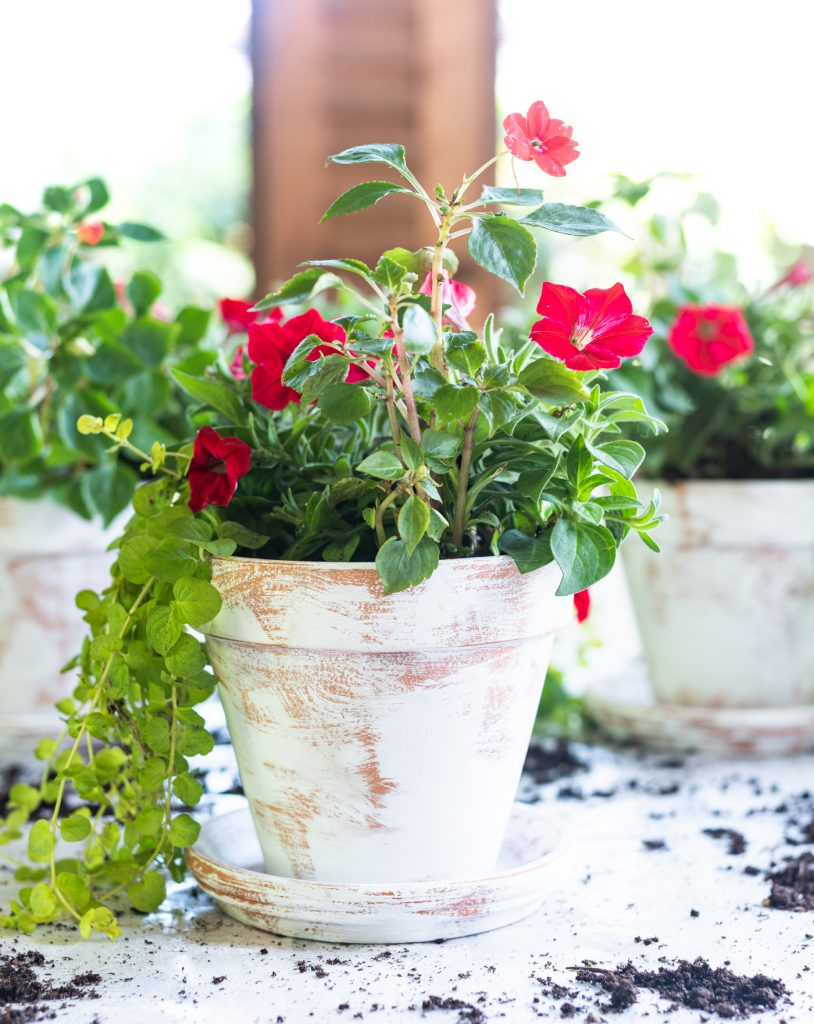 Easy distressed terracotta pots - how to age flower paints with paint and sandpaper