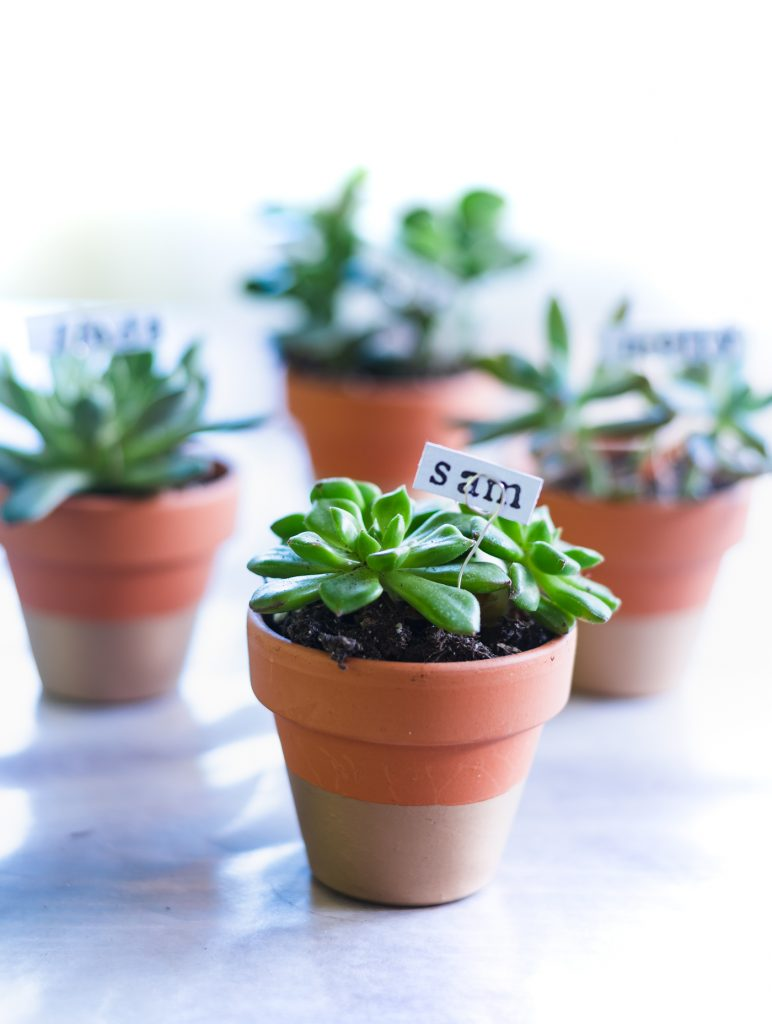 Succulent Place Card Holders - Gold Dipped Terracotta Pots