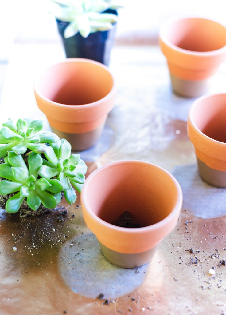 How to Make Succulent Place Card Holder Table Setting