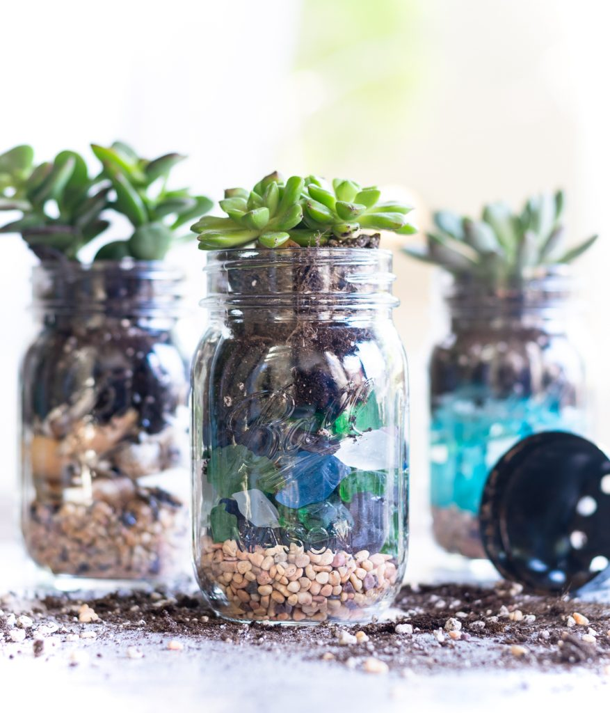 Succulent Seashell Mason Jar Planter It All Started With Paint